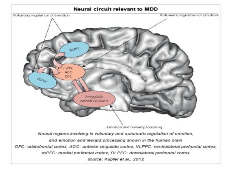Mekanisme kerja otak dari pasien depresi (Kupfer, Frank, & Phillips, 2012).