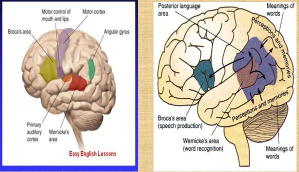 Neuropsikologi Berbahasa