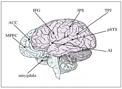 Otak Sosial