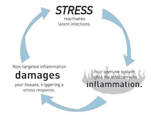 Stress, inflamasi